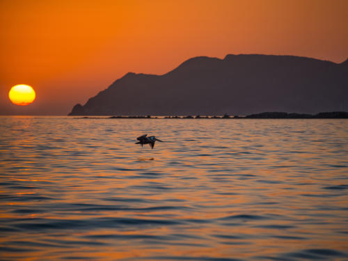 Isla Carman Sunrise Pelican