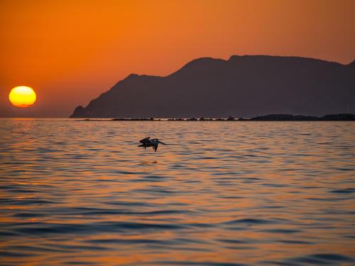 Isla Carman Sunrise Pelican