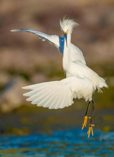 Kung Fu Egret