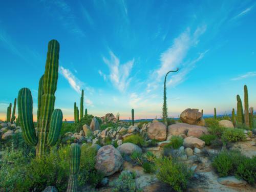 Catavina Desert 10