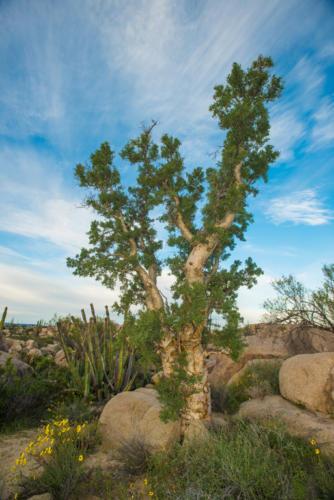 Catavina Desert 11