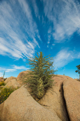 Catavina Desert 7
