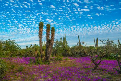 Vizcaino Reserve 10