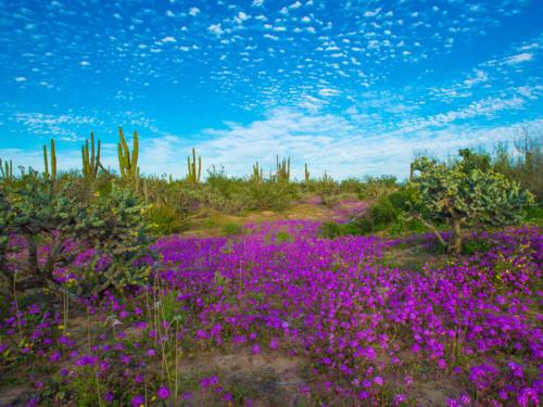 Vizcaino Reserve 2