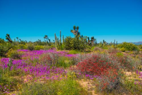 Vizcaino Reserve 3