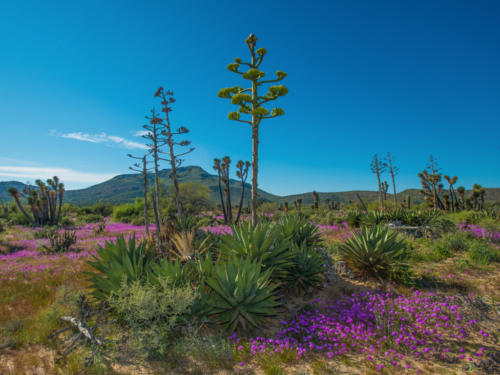 Vizcaino Reserve 8