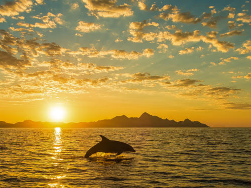 Isla Carman Bottlenose Dolphin Sunrise