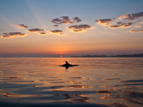 Isla Carman Dolphin Sunrise