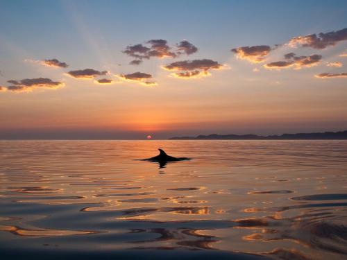 Isla Carman Dolphin Sunrise