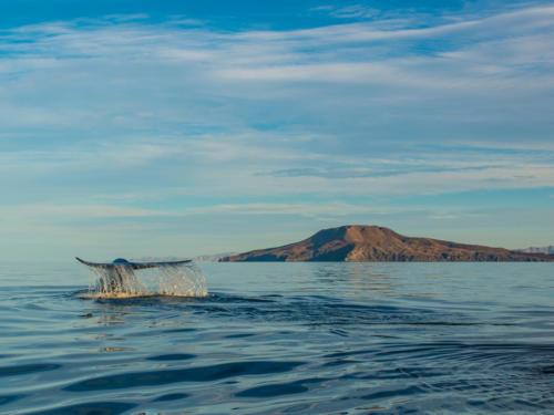 Blue Whale 17
