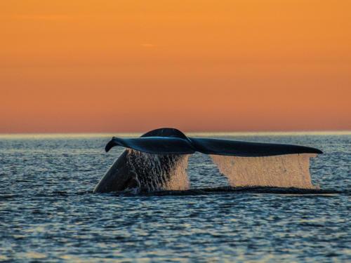 Blue Whale 5