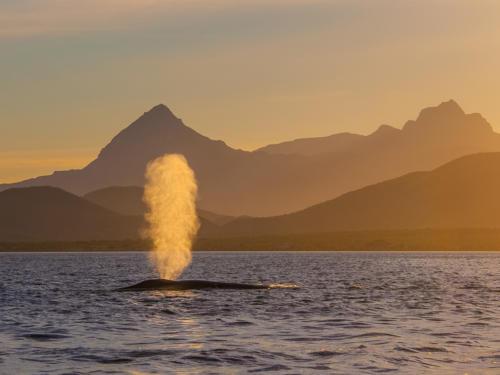 Blue Whale 9