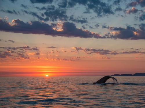 Humpback Whale 5
