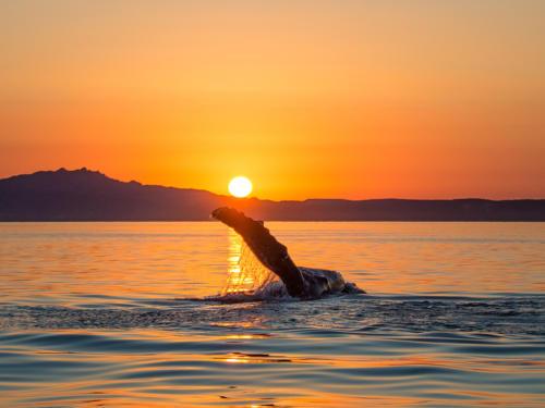 Humpback Whale 9